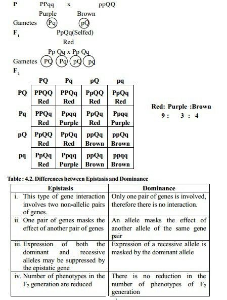 Epistasis - Gene Interaction - study Material lecturing Notes ...