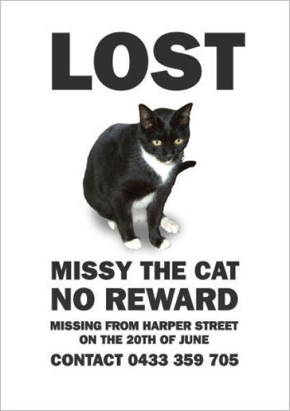 Best 25+ Missing cat poster ideas on Pinterest | Cat sayings, Cat ...