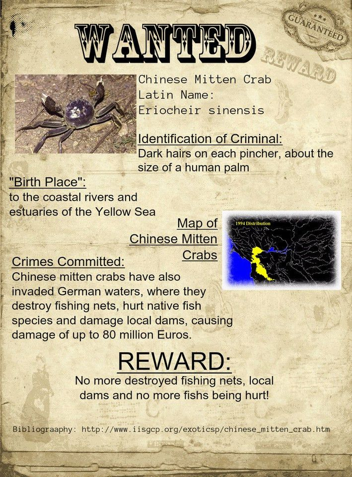 Invasive Species Wanted Poster Assignment