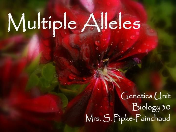 PPT - Multiple Alleles PowerPoint Presentation - ID:418486