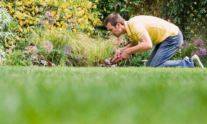 Neighborhood Lawn Care - lexington, KY | Groupon