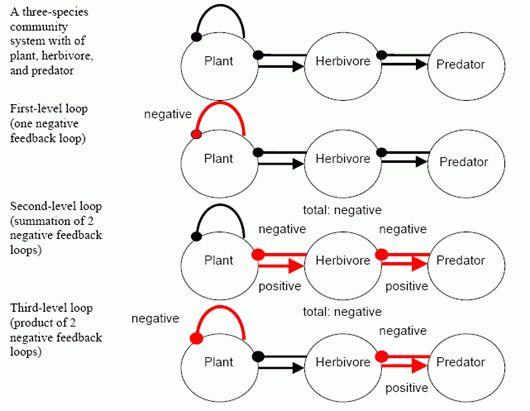Feedback Loops | Ecoplexity