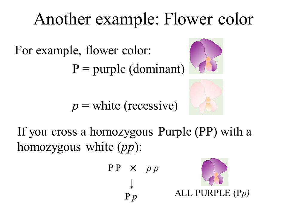 Another example: Flower color For example, flower color: P ...