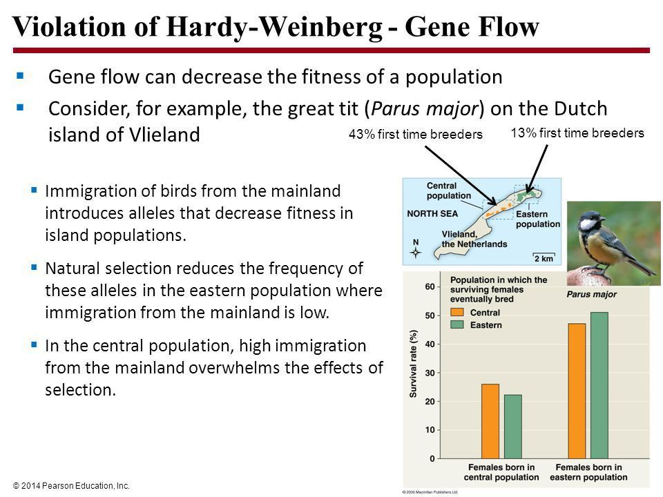 Ecology and Evolution Outcomes Apply the Hardy-Weinberg principle ...