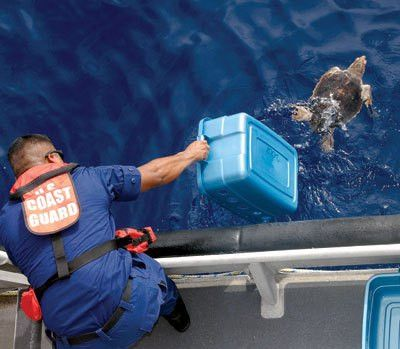 marine biology buzzlecom. interesting facts about marine ...