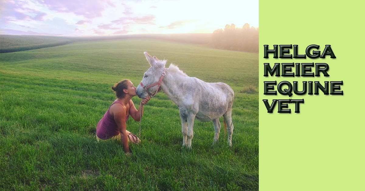 Interviews with Veterinary Professionals | I Love Veterinary