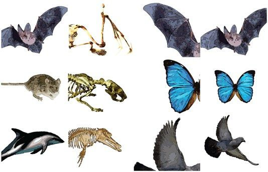 Convergent evolution | DragonflyIssuesInEvolution13 Wiki | FANDOM ...