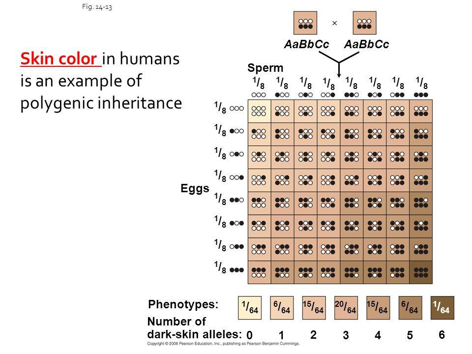 EVOLUTION: Molecular Genetics - ppt download
