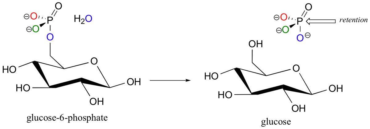 10.3: Hydrolysis of phosphates - Chemistry LibreTexts