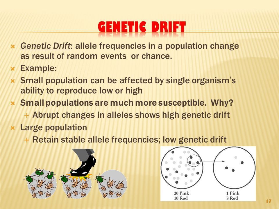 The Evolution of Populations and Speciation - ppt download