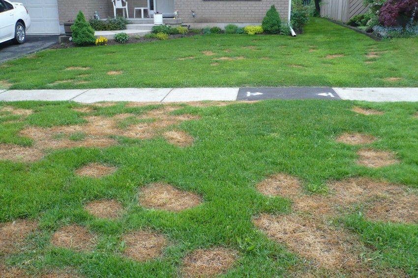 Ultra Lawn Care Company Lawn Services Niagara