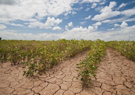 Blog Archives Tag: Crop Insurance | USDA