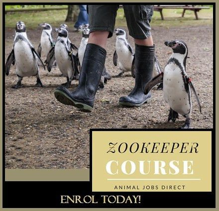 Zookeeper Course and Training for Zoo Keeping Work