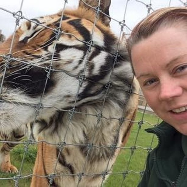 Desperate pleas for tiger to be spared after mauling zookeeper to ...