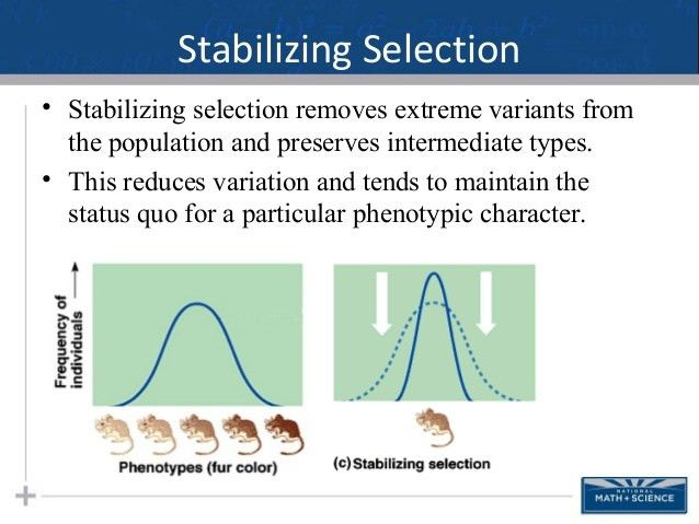 Microevolution Changing Allele Frequencies