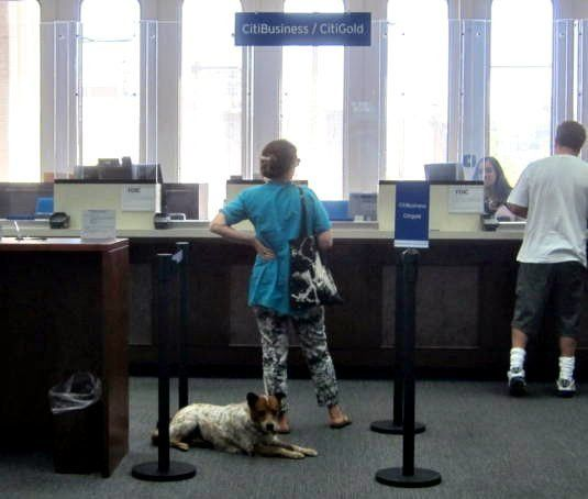 No one likes to wait for a bank teller … not even a dog | The ...