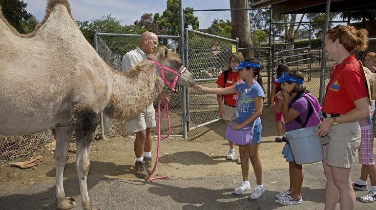 Internships | San Diego Zoo