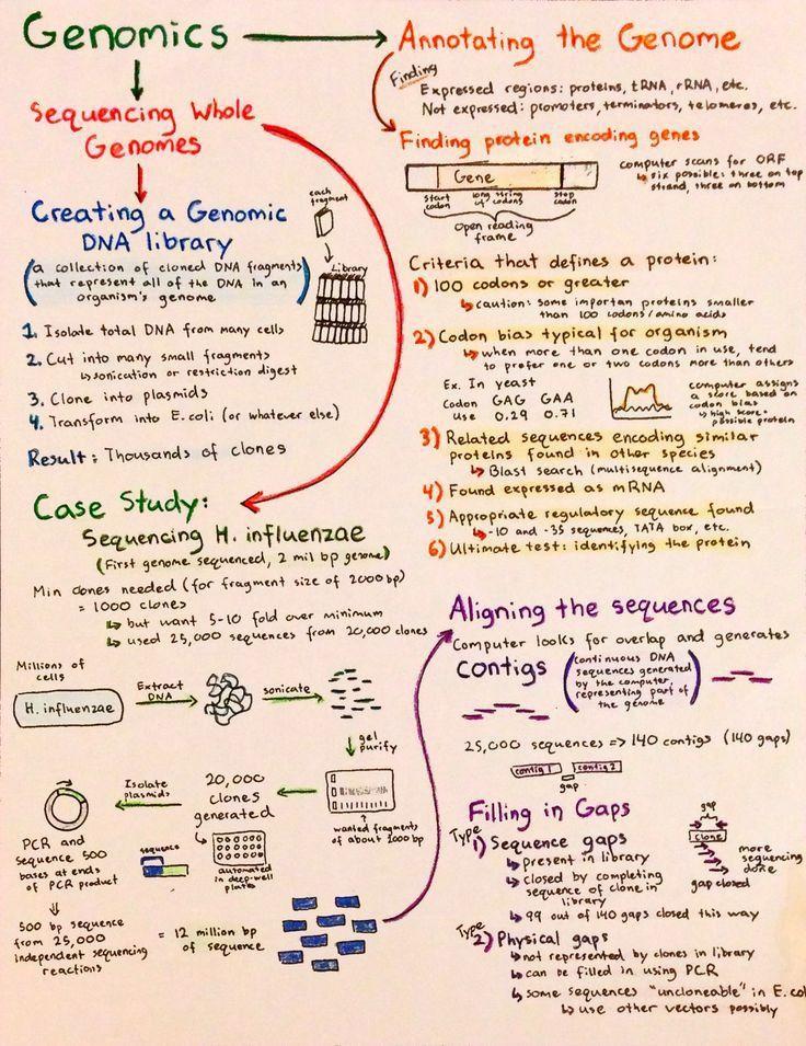 Best 25+ Biotechnology careers ideas on Pinterest | Biology major ...