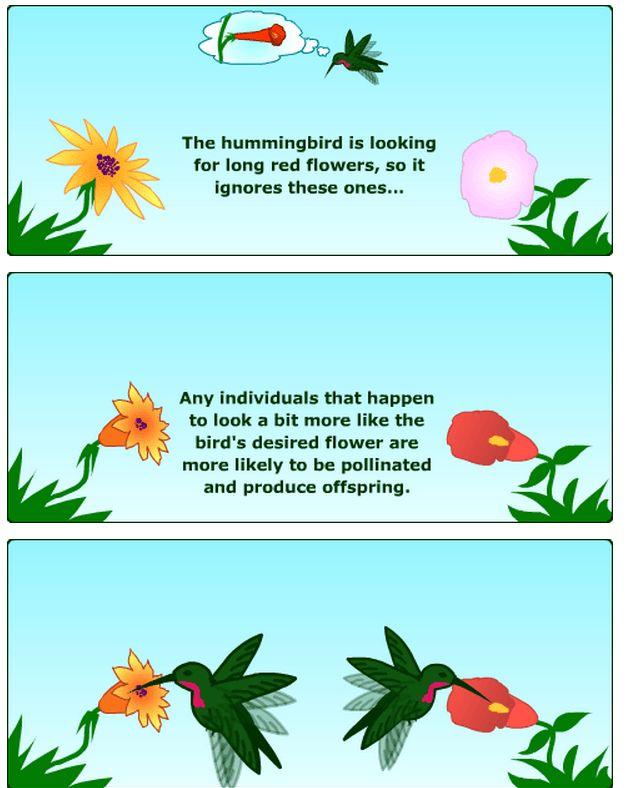 Convergent evolution « KaiserScience