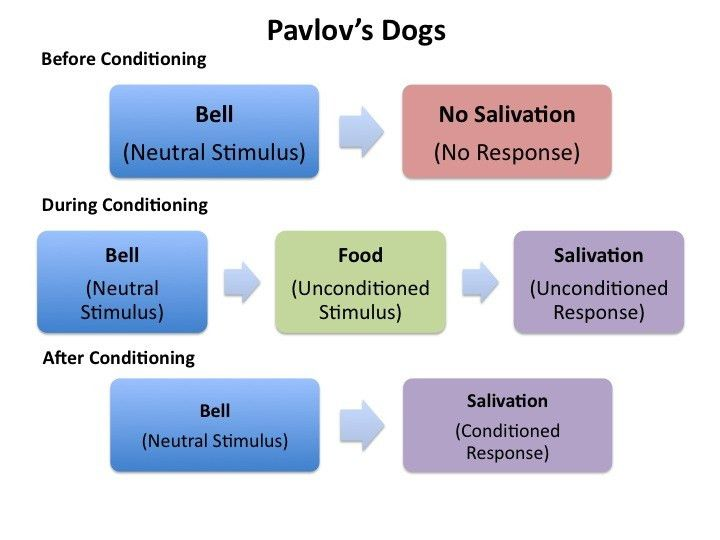 Learning: Classical Conditioning | PlayLearnParent