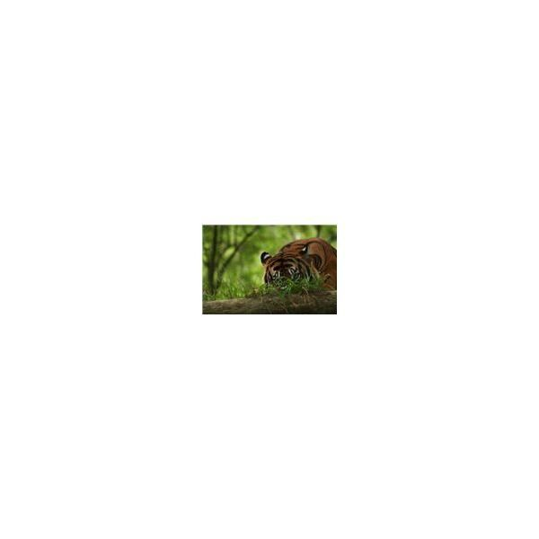 Wildlife Biologist Job Description & Career Profile