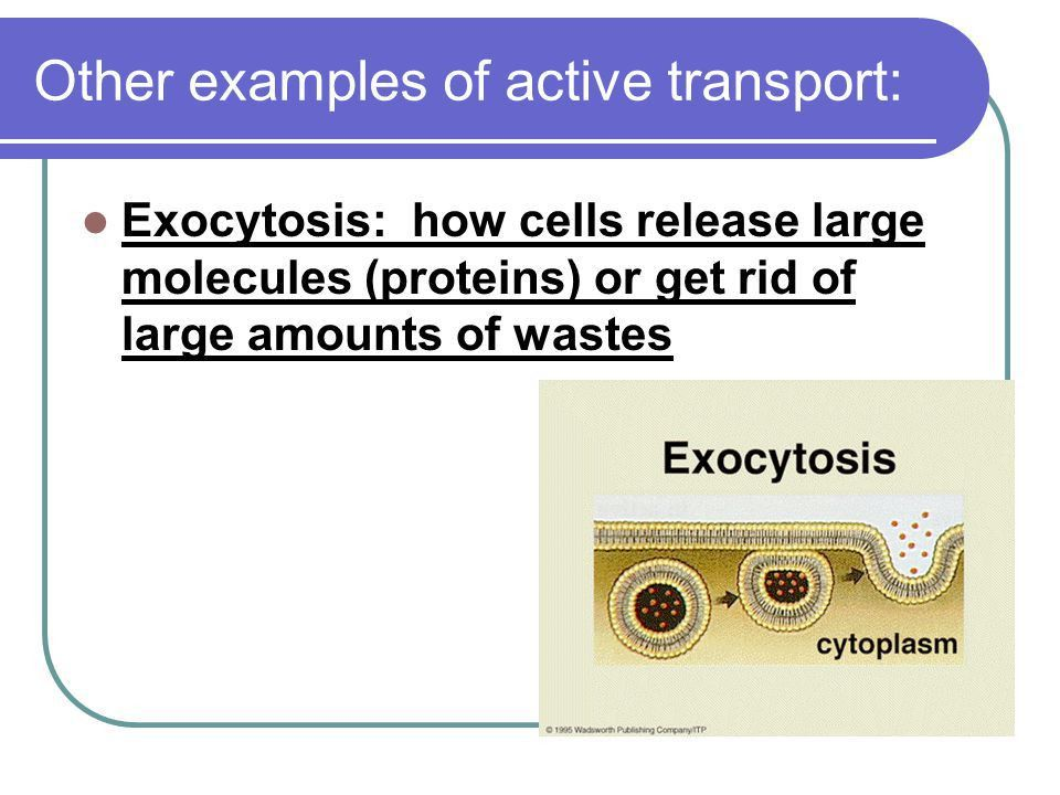 Cell Membrane and Transport - ppt video online download