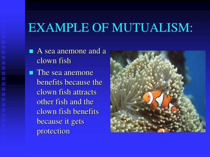 PPT - SYMBIOTIC RELATIONSHIPS WORDS 17-22 Symbiosis Mutualism ...