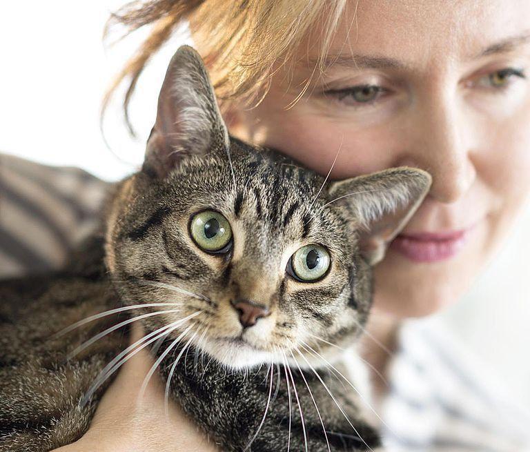 Career Profile: Pet Adoption Counselor
