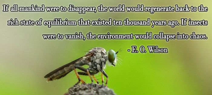 E.O. Wilson quote on the importance of insects #science #insects ...