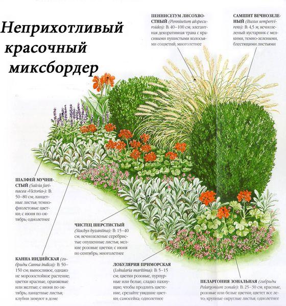 Миксбордер из кустарников схемы