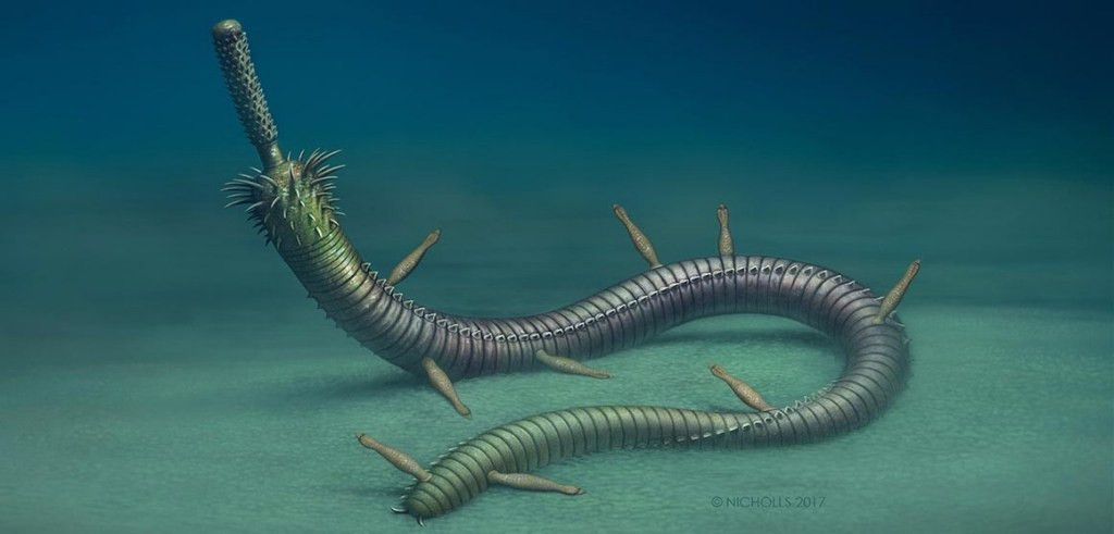 Infested fossil worms show ancient example of symbiosis | Natural ...