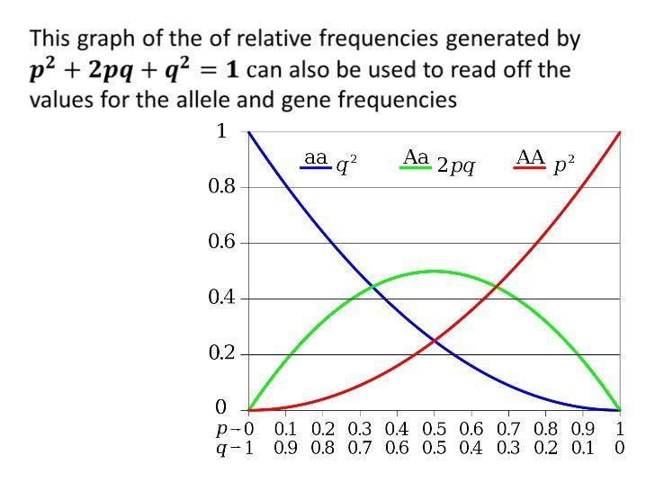 IB Biology Option D.4: Hardy Weinberg Principle