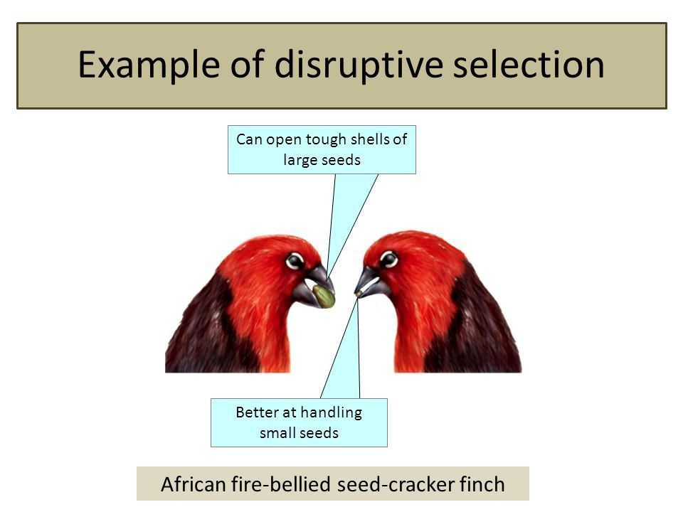 Geeked About Beaks. Beak adaptations to food sources. - ppt download