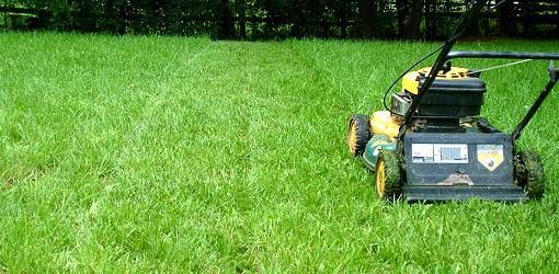 Summer Lawn Care Guide | Today's Homeowner