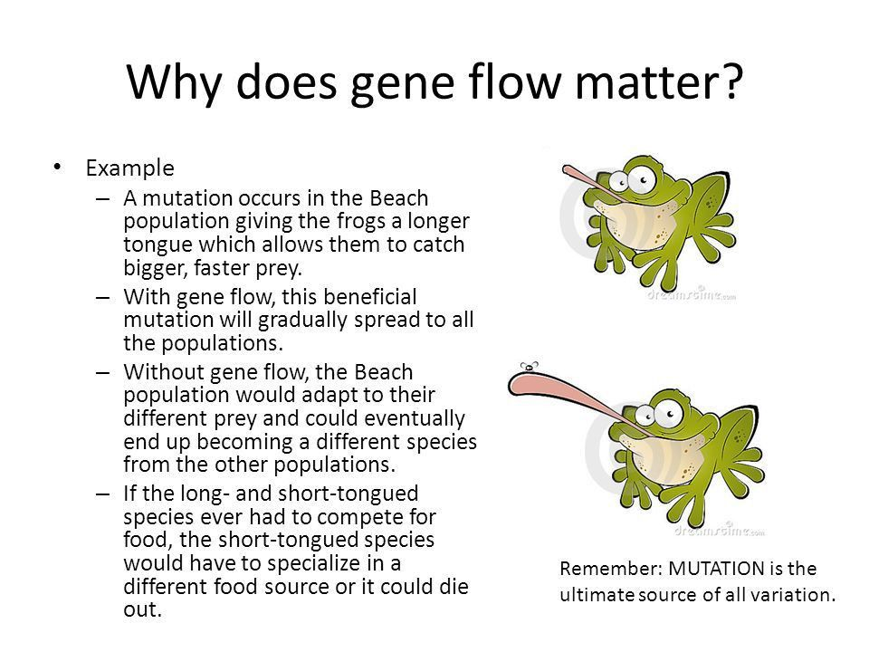 Population Genetics. What we know already Sources of variation ...
