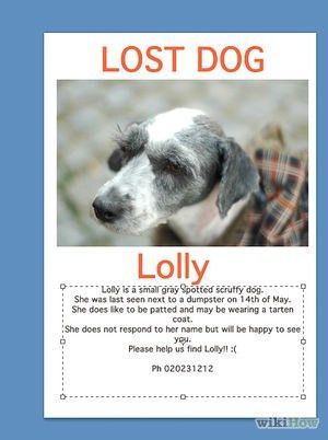 How to Make Lost Pet Signs