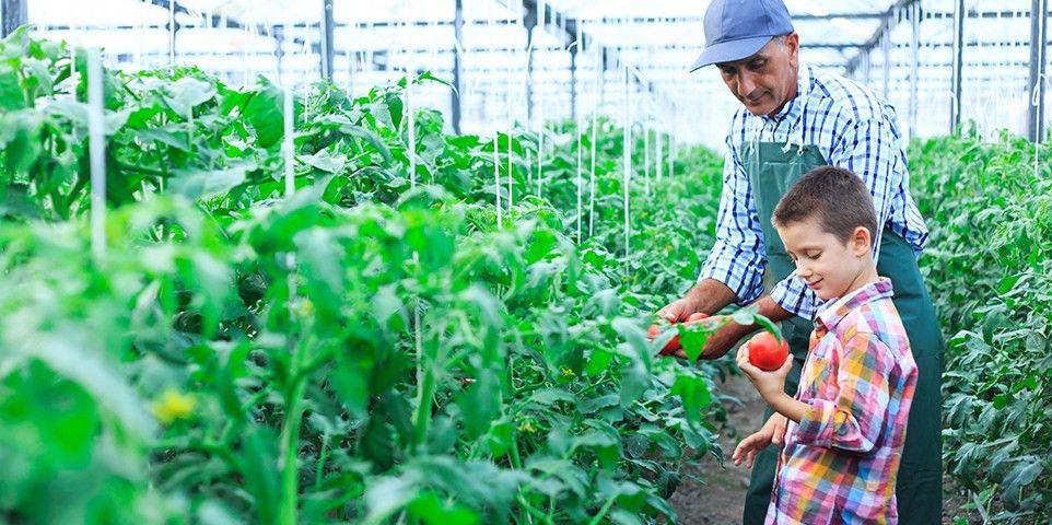 Background on: Crop Insurance | III