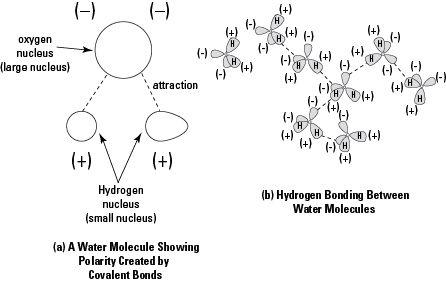 Atoms, Molecules, Ions, and Bonds