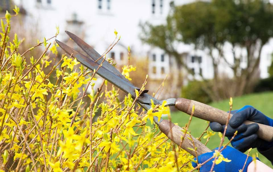 Spring Home Maintenance | Travelers Insurance