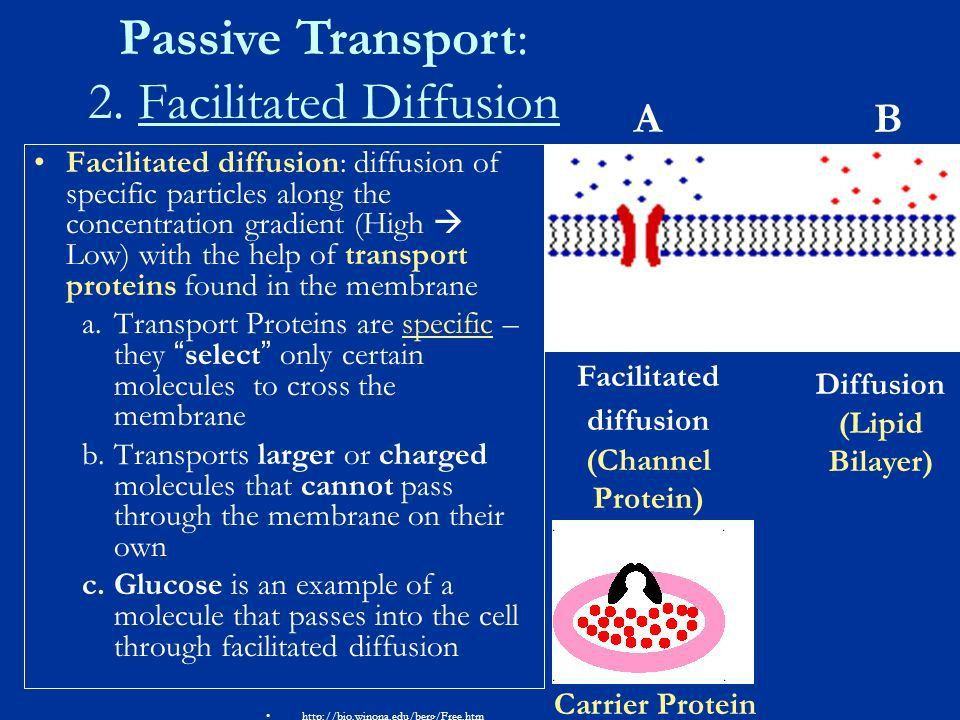 Cellular Transport Notes. About Cell Membranes All cells have a ...