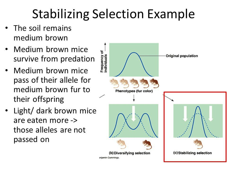 Types of Natural Selection - ppt video online download