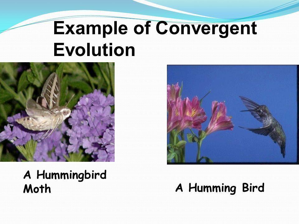 Mechanisms of Evolution - ppt download