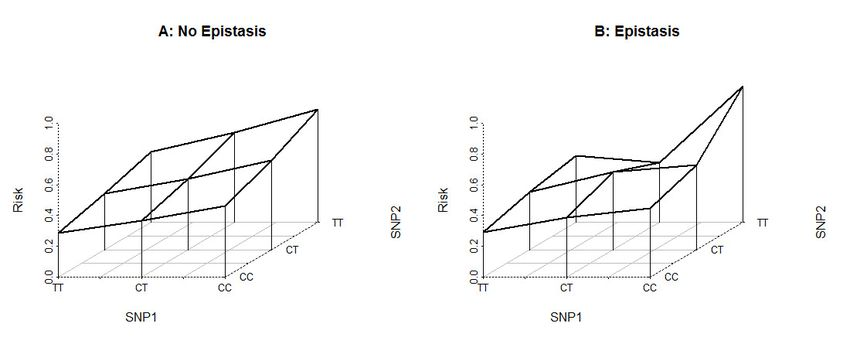 Example of application of epistasis. Disease penetrance for ...