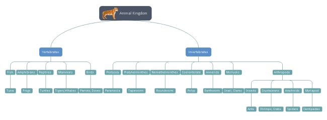 Animal Kingdom Tree Chart   Free Animal Kingdom Tree Chart Templates