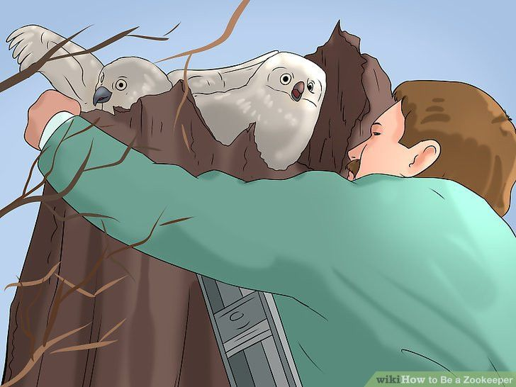 How to Be a Zookeeper: 9 Steps (with Pictures) - wikiHow