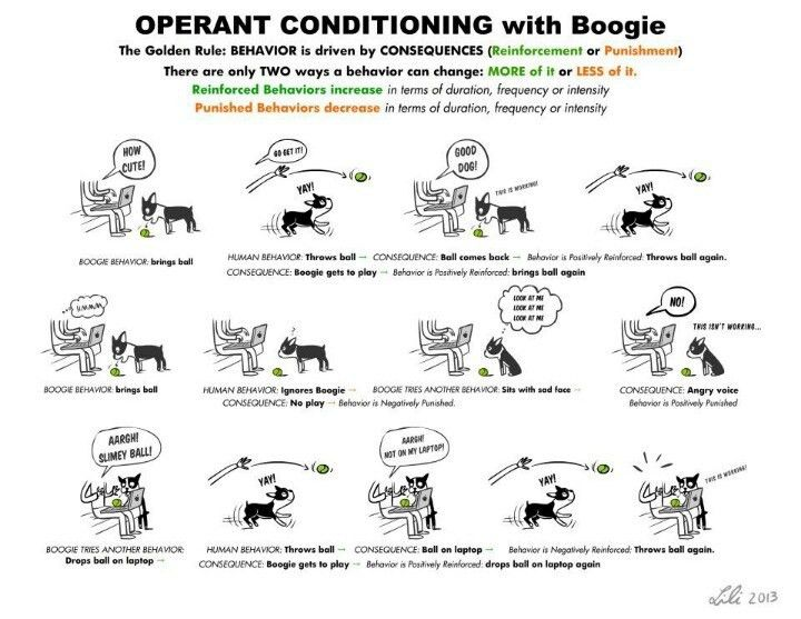 Image Gallery operant conditioning graphics
