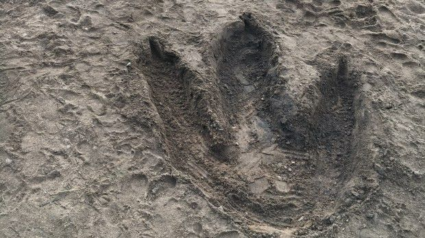 Minnesota Zoo Dinosaur exhibit leaves big footprints