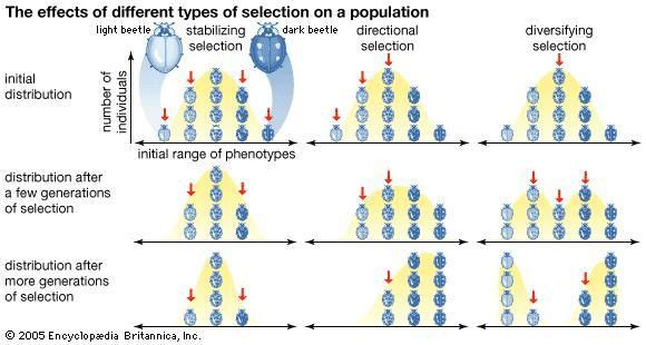 selection | biology | Britannica.com