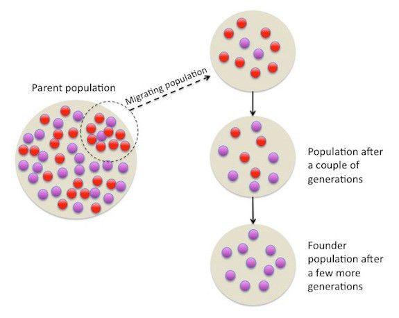 Population Genetics | Biology | Visionlearning