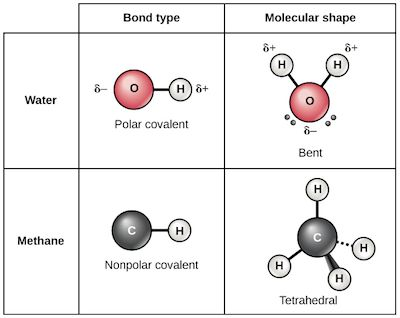 Chemical bonds | Chemistry of life | Biology (article) | Khan Academy